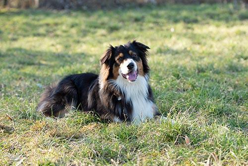 Romuald Deschodt Conseils pour l'adoption d'un chien